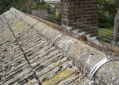 Apex roof gull proofing