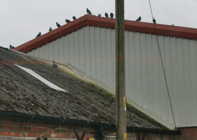 Pigeon proofing and clearence work