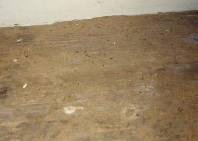 Woodworm emergance damage
