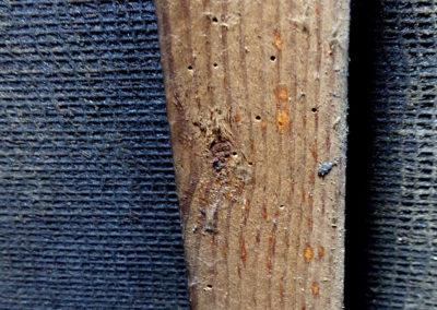 Woodworm damage